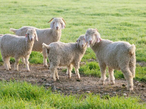 DPE brings wool and mohair stakeholders together